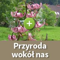 Przyroda wokol nas - Galeria W Dolinie Modrzewi - agroturystyka Rudawy Janowickie